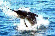 Pêche au gros aux Seychelles