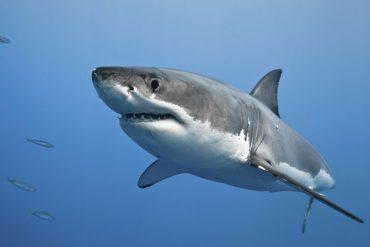 Arrêtons de massacrer les espèces sous-marines