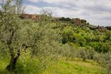 Des jardins aux pieds de Sienne