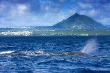 A l'île Maurice, j'ai plongé avec des cachalots