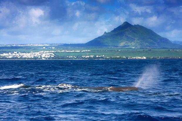 Le souffle des cachalots à l'île Maurice