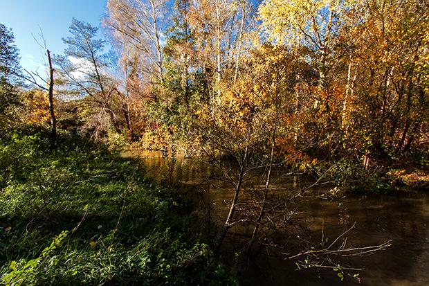 En forêt au bord de la rivière