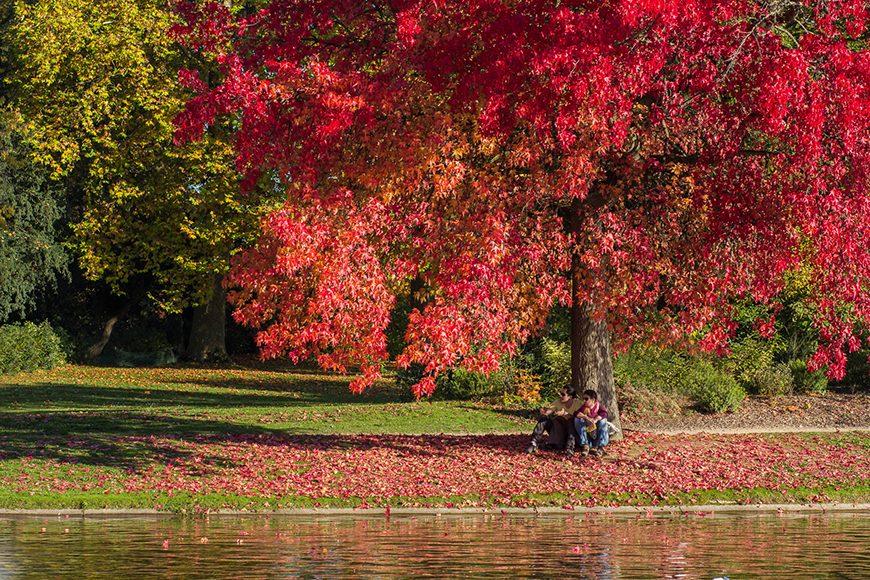 couleur-automne (11)
