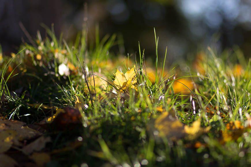 couleur-automne (12)