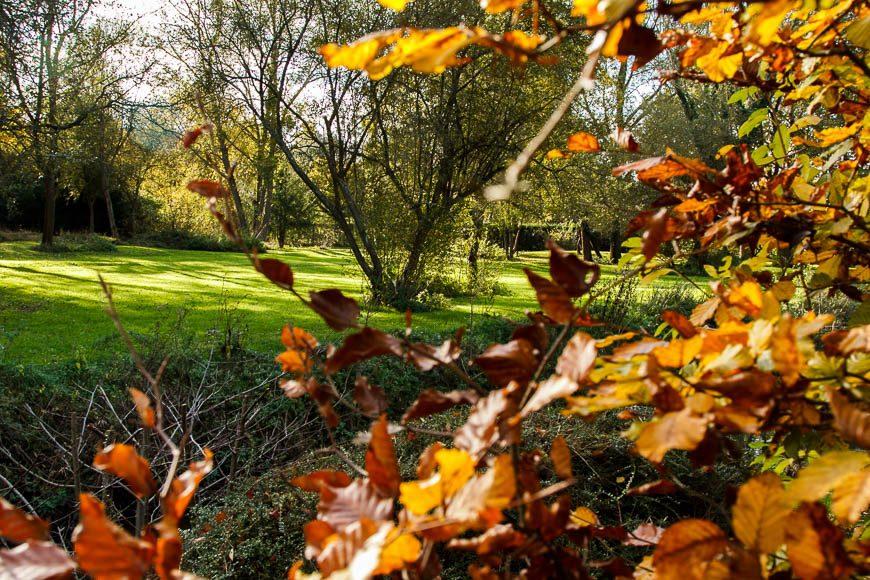 couleur-automne (2)