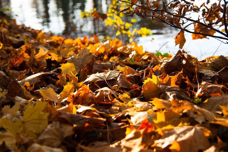 couleur-automne (6)
