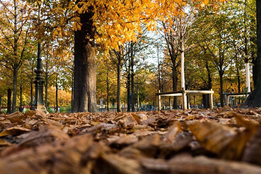 couleur-automne (7)