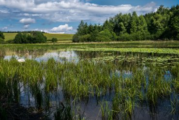 Le plateau des 1000 étangs