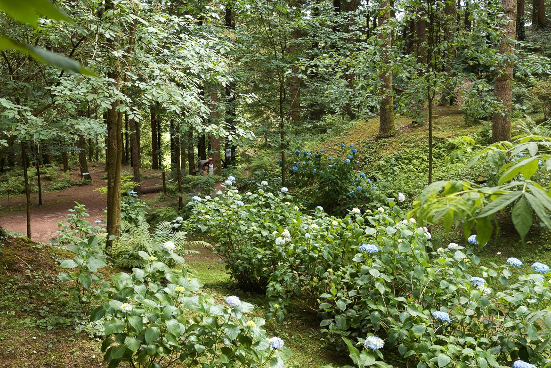 Le jardin à l'anglaise de la Cude